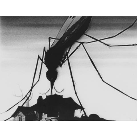 ディズニーのマラリア蚊 資料映像