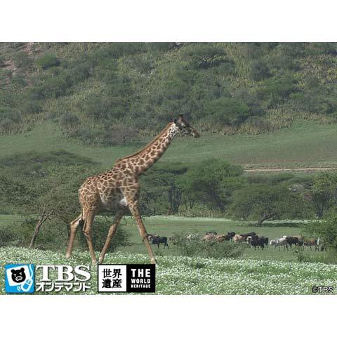 世界遺産~ンゴロンゴロ自然保護区(タンザニア)~
