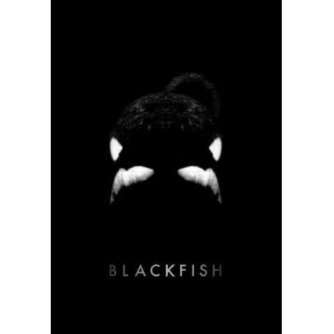ブラックフィッシユ:「殺人シャチ」と呼ばれた黒き悲しき生物