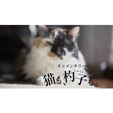 ネコメンタリー 猫も、杓子も。
