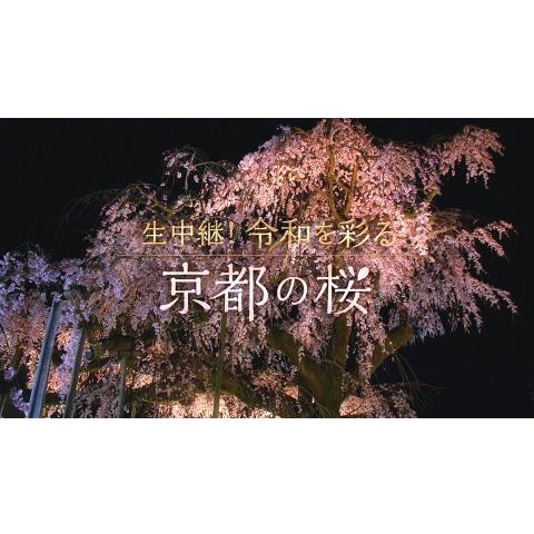 生中継! 令和を彩る京都の桜