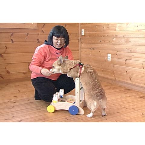 あなたにもできる愛犬のしつけ&トレーニング