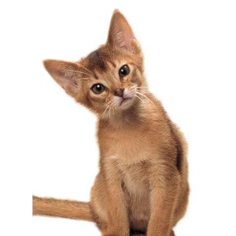 どうぶつだいすき!かわいいネコちゃん
