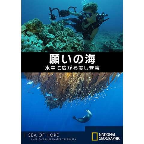 願いの海:水中に広がる美しき宝