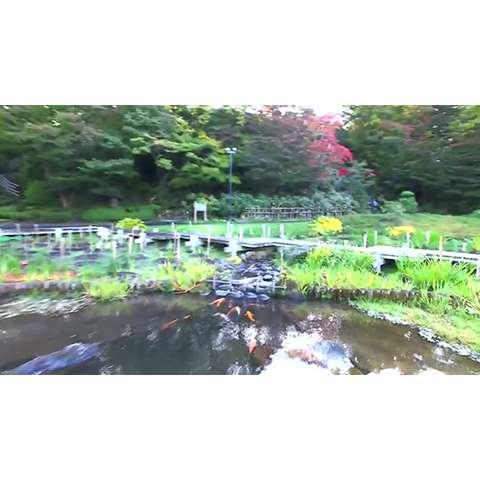 藤田記念庭園~Fujita Memorial Japanese Garden~