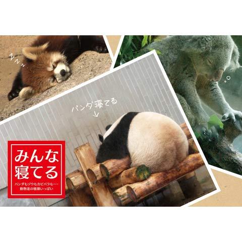 みんな寝てる ~パンダもゾウもカピバラも・・・動物達の寝顔いっぱい~