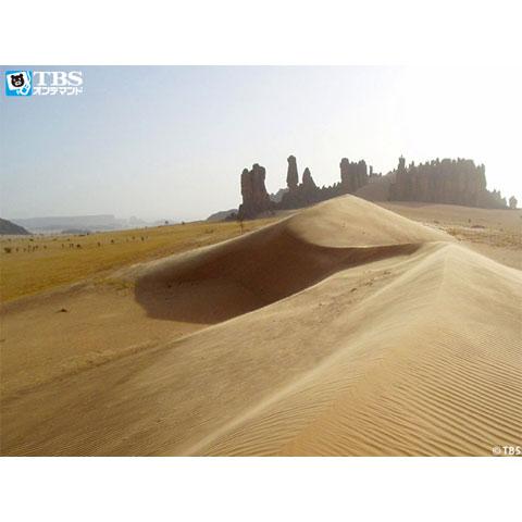 砂漠は生きている
