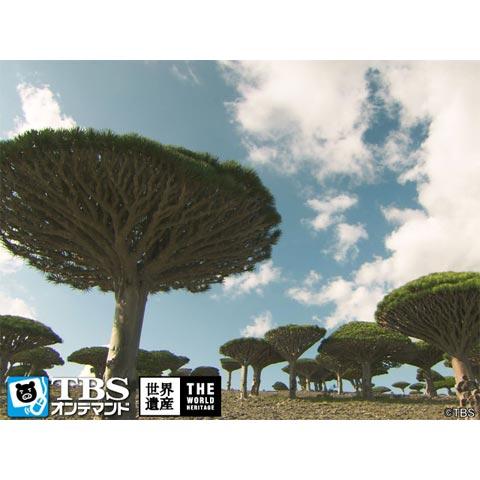 THE 世界遺産~赤い宝石の島 ソコトラ諸島(イエメン)~