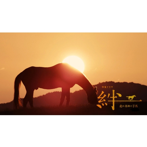 特集ドラマ 絆~走れ奇跡の子馬~