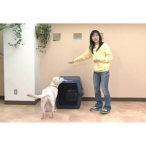 愛犬のトレーニング教室 ~飼ってからのしつけ~