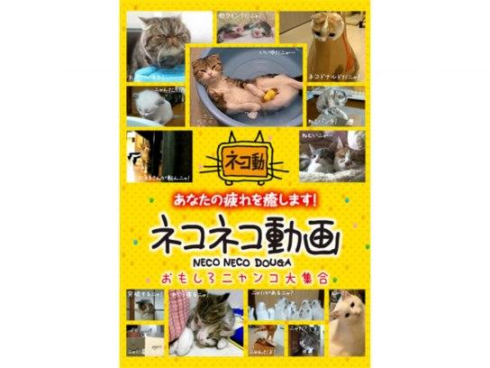 ネコネコ動画~おもしろニャンコ大集合~