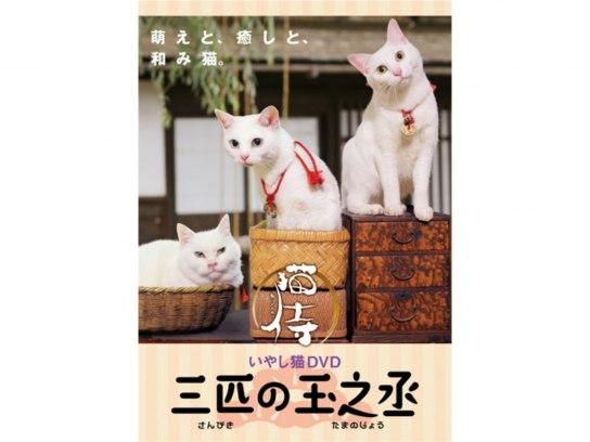 猫侍 三匹の玉之丞