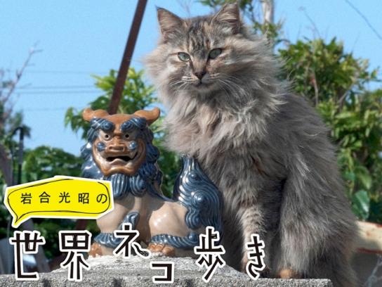 岩合光昭の世界ネコ歩き